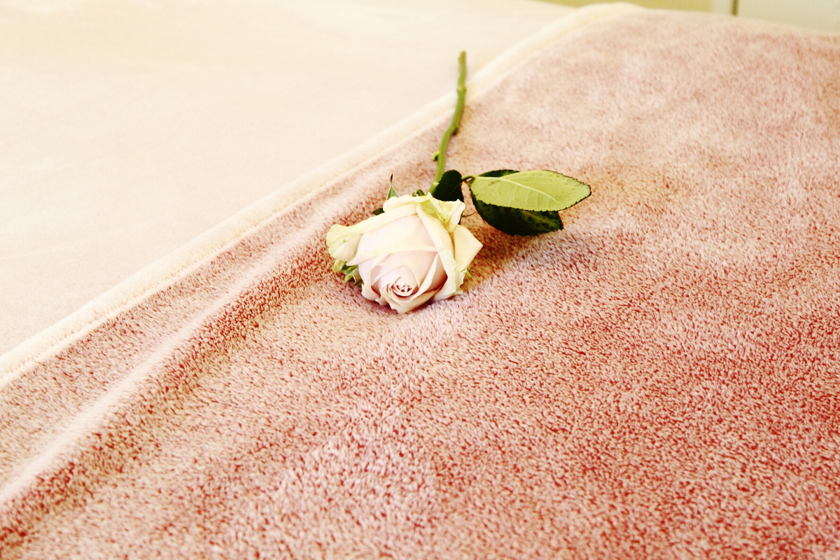 A pink rose on a fluffy blanket