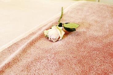 A rose on a fluffy blanket