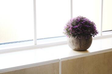 A potplant by the bathroom window
